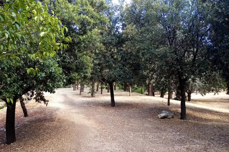 Parco comunale Terlizzi. <span>Foto Cosma Cacciapaglia</span>